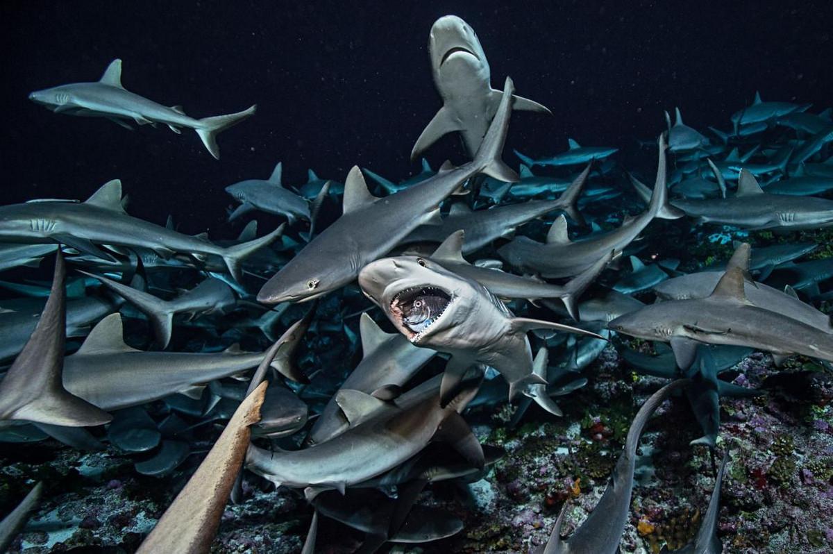 привлекательные цены акулы виды акул фото фотокнигах применяется высококачественная