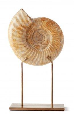 Аммонит Perisphinctes sp.на подставке