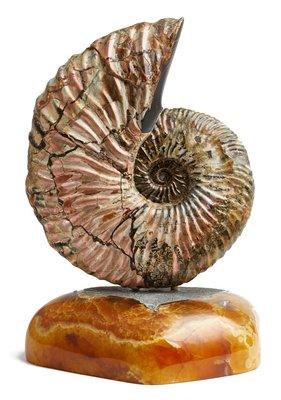 Аммонит Deshayesites sp. на симбирцитовой подставке