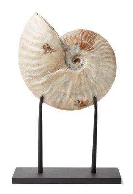 Аммонит Cleoniceras sp. на подставке