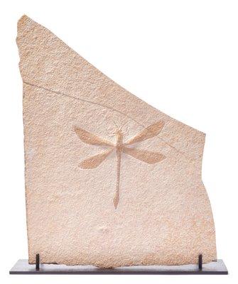 Стрекоза Protolindenia wittei