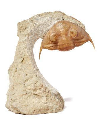 Трилобит Pseudoasaphus platiurus