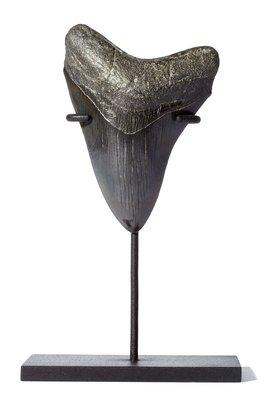 Зуб мегалодона 11,2 см на подставке коллекционного качества