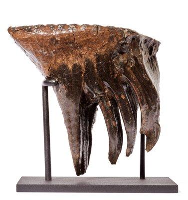 Зуб мамонта на подставке