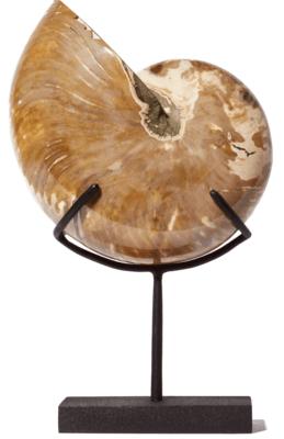 Наутилус Cymatoceras sp. на подставке