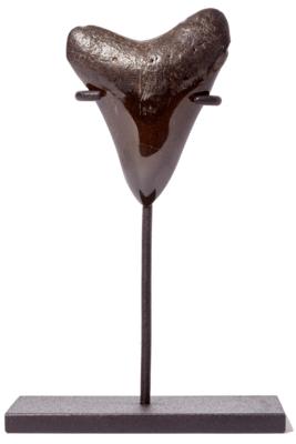 Зуб мегалодона 8,5 см на подставке