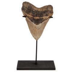 Зуб мегалодона 13,5 см на подставке