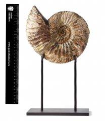 Aммонит Deshayesites sp. на подставке