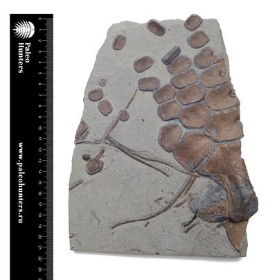 Ласт ихтиозавра