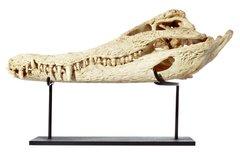 Череп крокодила