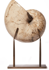 Наутилус Cymatoceras sp. на латунной подставке