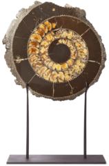 Аммонит  Speetoniceras versicolor на подставке