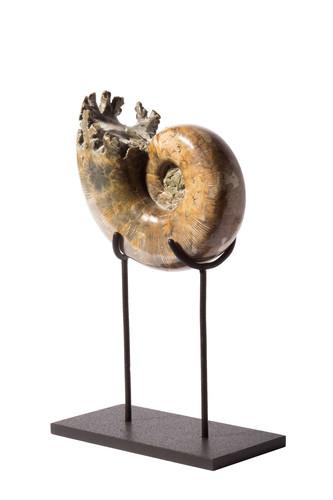 Аммонит Lytoceras sp. на подставке