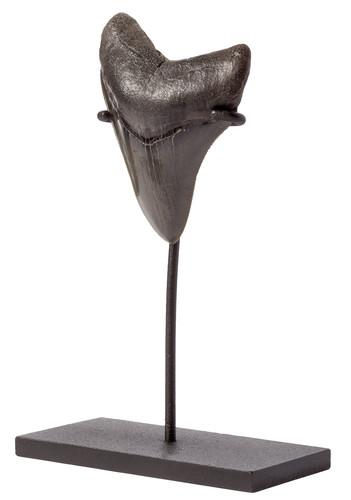 Зуб мегалодона 9,2 см коллекционного качества на подставке