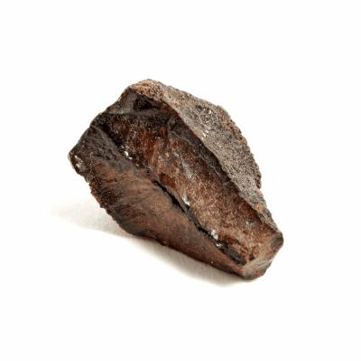 Зуб трицератопса