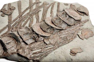 Позвоночник и ребра ихтиозавра