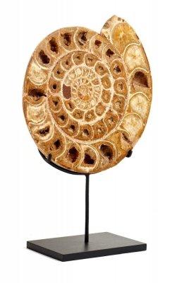 Аммонит Perisphinctes sp. на подставке