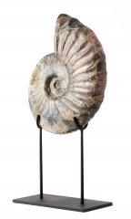 Аммонит Deshayesites sp. на подставке